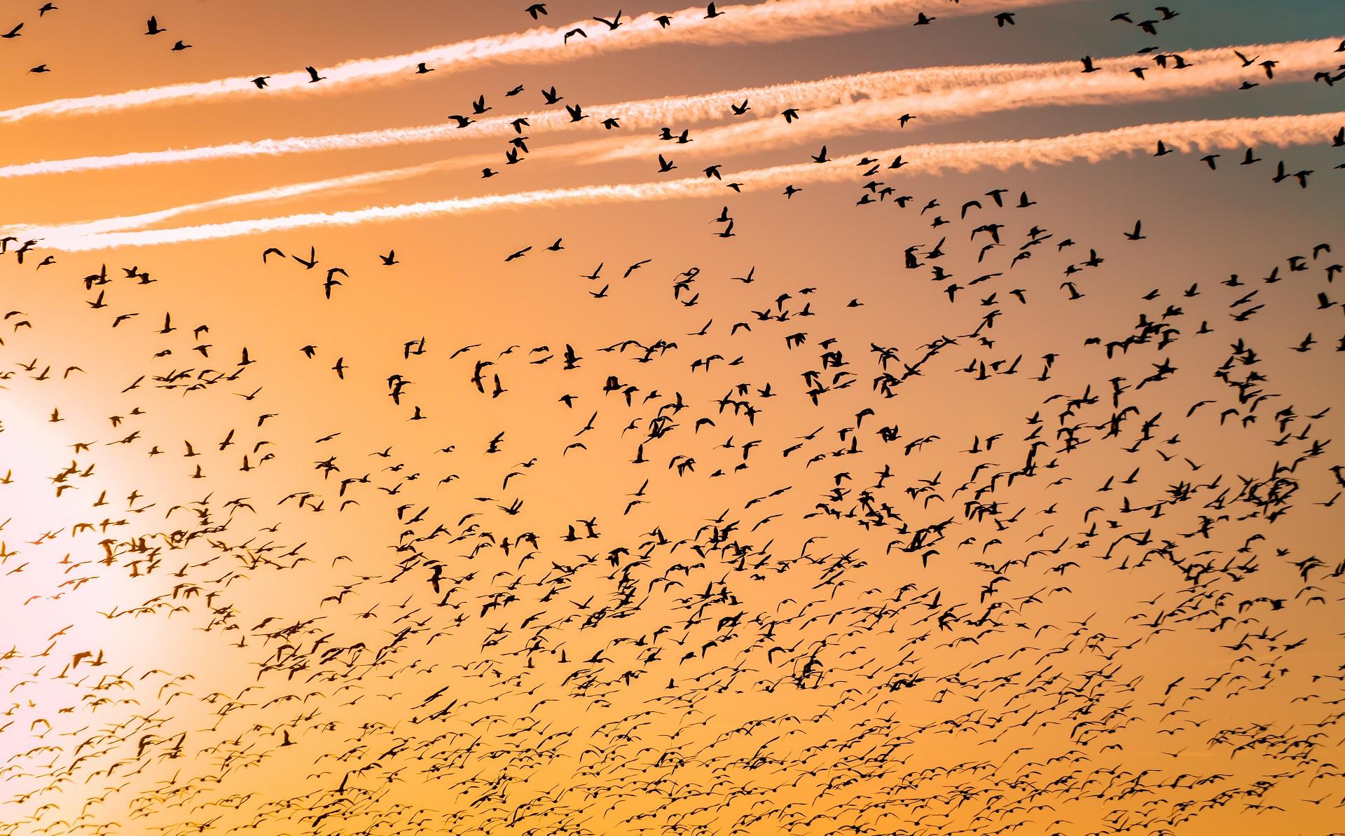 Πουλιά στον ουρανό